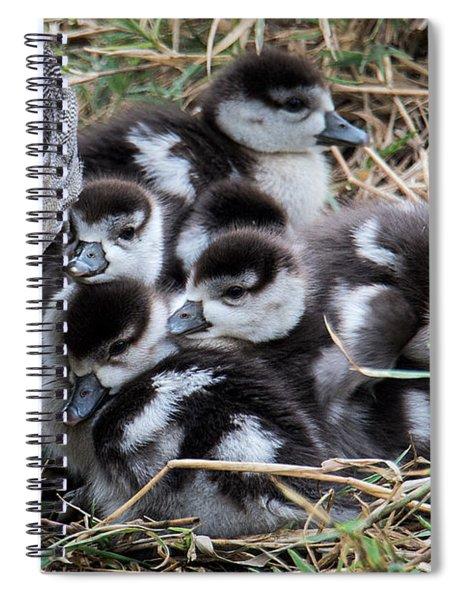 Egyptian Goose Alopochen Aegyptiacus Spiral Notebook