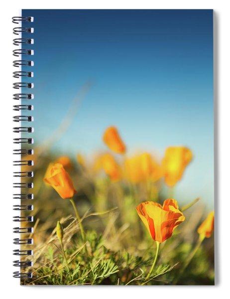 El Paso Poppies Spiral Notebook