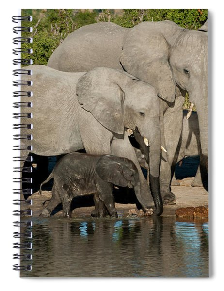Elephant 3 Spiral Notebook