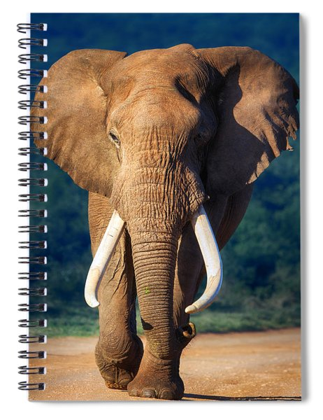 Elephant Approaching Spiral Notebook