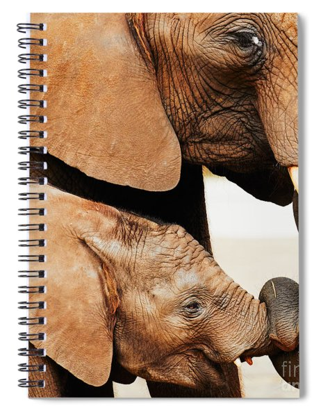 Elephant Calf And Mother Close Together Spiral Notebook