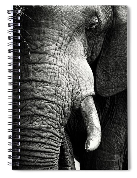 Elephant Close-up Portrait Spiral Notebook