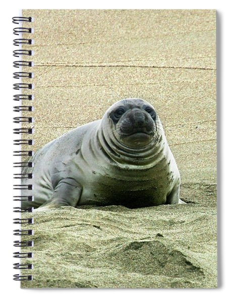 Elephant Seal Pup Spiral Notebook