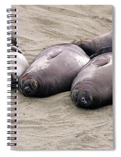 Elephant Seals Spiral Notebook