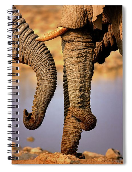 Elephant Trunks Interacting Close-up Spiral Notebook
