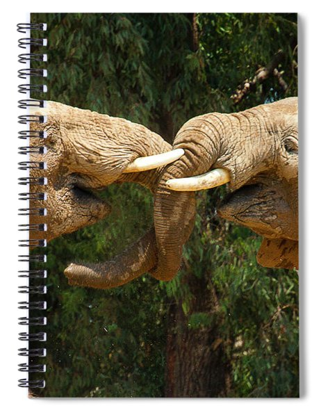 Elephants Playing  Spiral Notebook