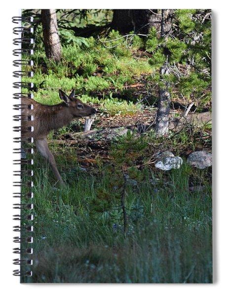 Baby Elk Rmnp Co Spiral Notebook