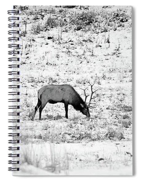 Elk In Black And White - Estes Park Spiral Notebook
