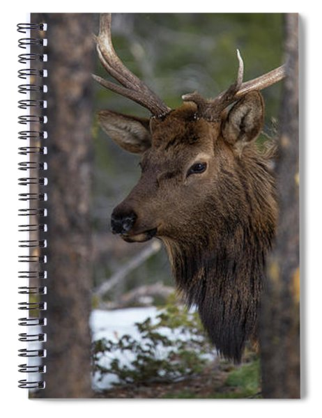Elk In Rocky Mountain National Park Spiral Notebook