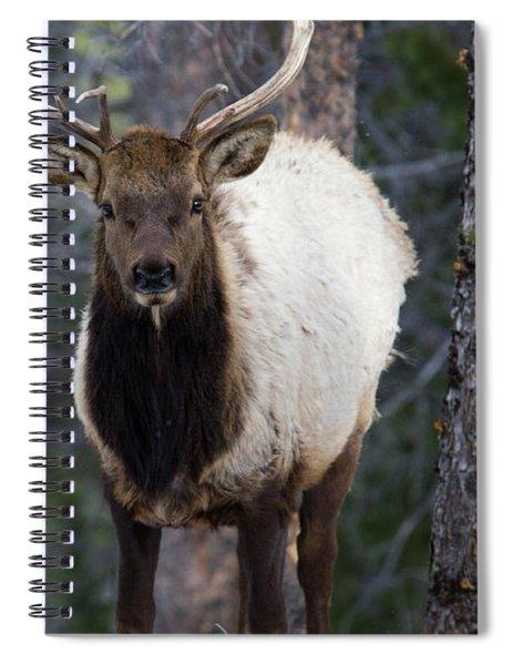 Elk In The Rockies Spiral Notebook