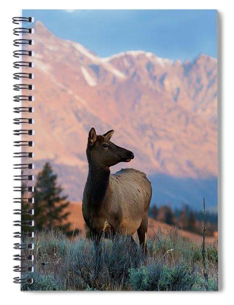 Elk Majesty Spiral Notebook