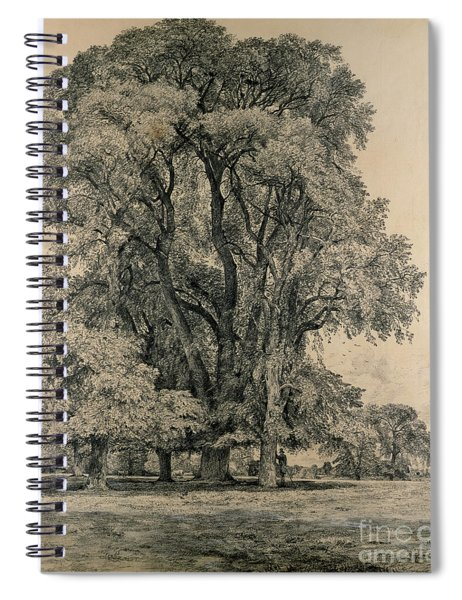 Elm Trees In Old Hall Park Spiral Notebook