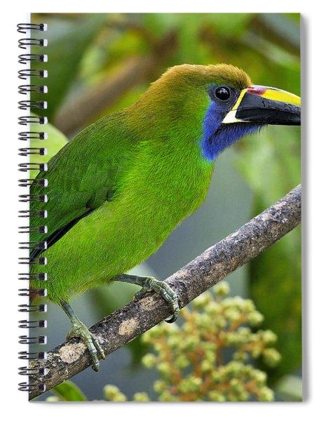 Emerald Toucanet Spiral Notebook