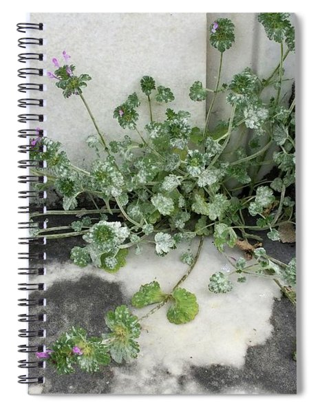 Emergence Spiral Notebook