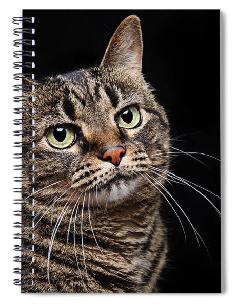 Emmy The Cat Ponder Spiral Notebook