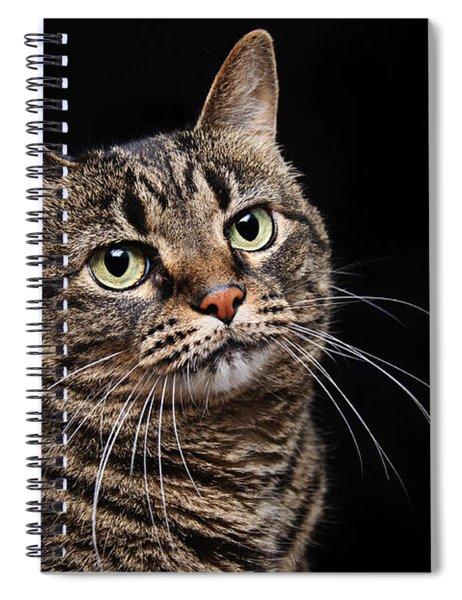 Emmy The Cat Ponder Spiral Notebook