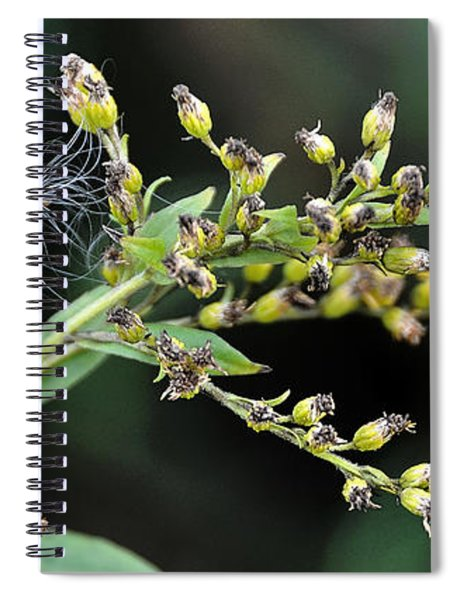 Entrapped Spiral Notebook