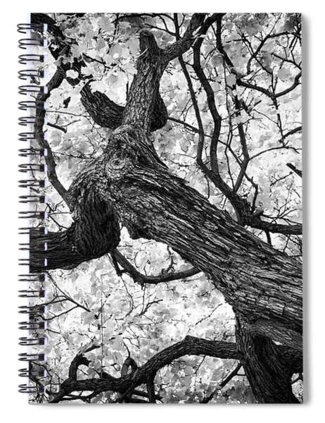 Ethereal Maple Spiral Notebook
