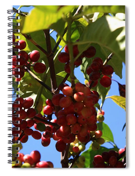 Ethiopian Coffee Beans Spiral Notebook