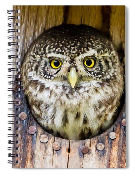 Eurasian Pygmy Owl Spiral Notebook