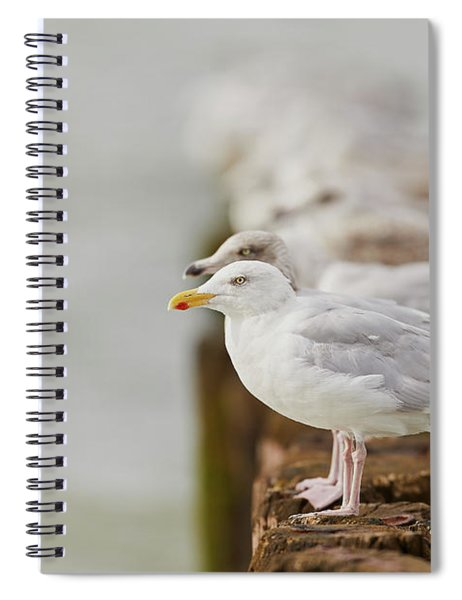 European Herring Gulls In A Row Fading In The Background Spiral Notebook