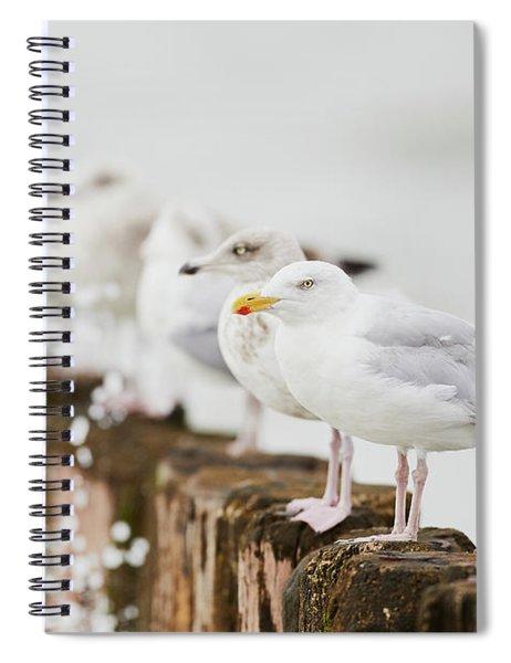 European Herring Gulls In A Row  Spiral Notebook
