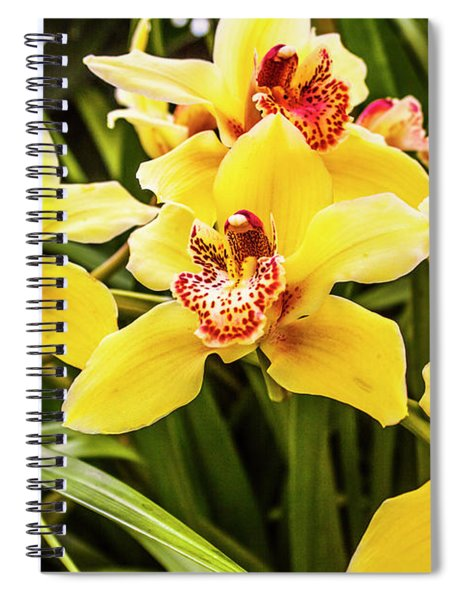 Exotic Orchids  Spiral Notebook