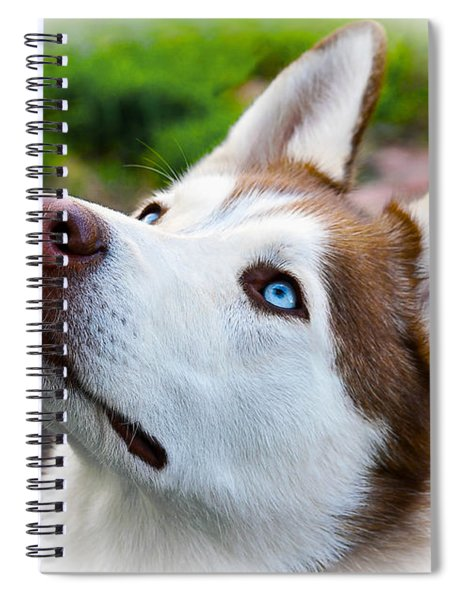 Spiral Notebook featuring the digital art Expressive Siberian  Husky Photo C62017 by Mas Art Studio