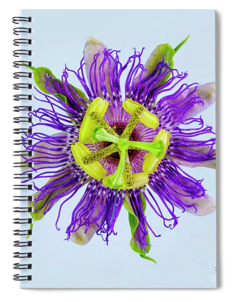 Expressive Yellow Green And Violet Passion Flower 50674b Spiral Notebook