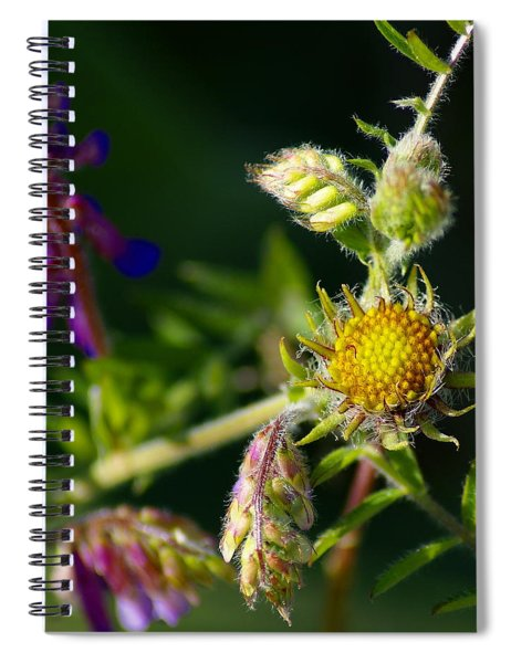 Eye Candy From The Garden Spiral Notebook