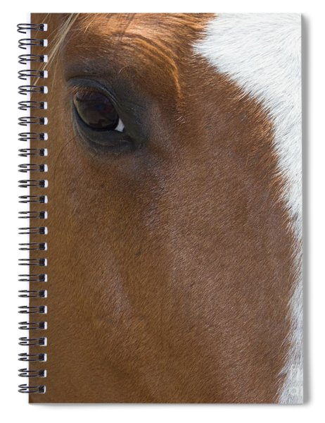 Eye On You Horse Spiral Notebook