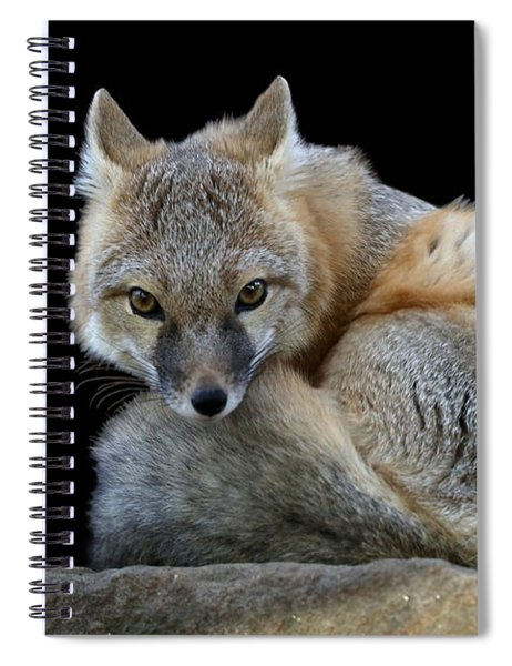 Eyes Of The Fox Spiral Notebook