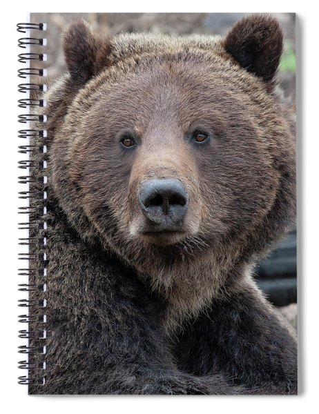 Face Of The Grizzly Spiral Notebook