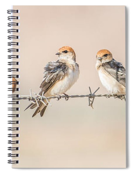 Fairy Martins Spiral Notebook