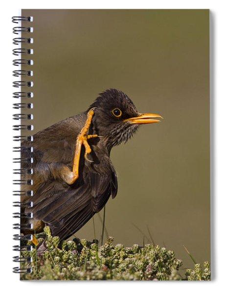 Falkland Thrush Spiral Notebook