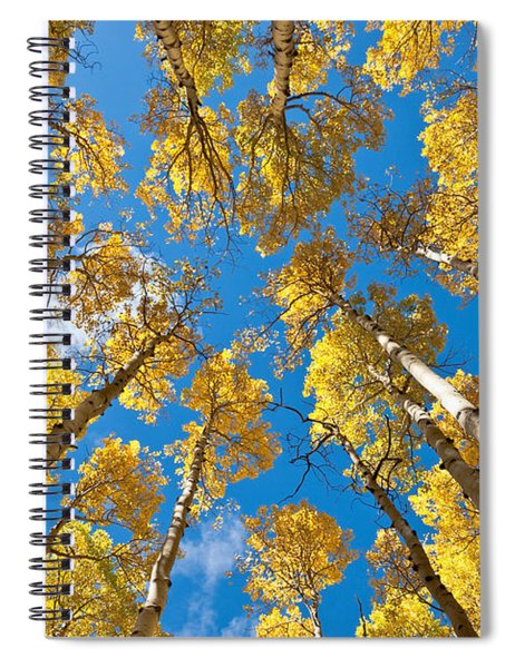 Fall Colored Aspens In The Inner Basin Spiral Notebook