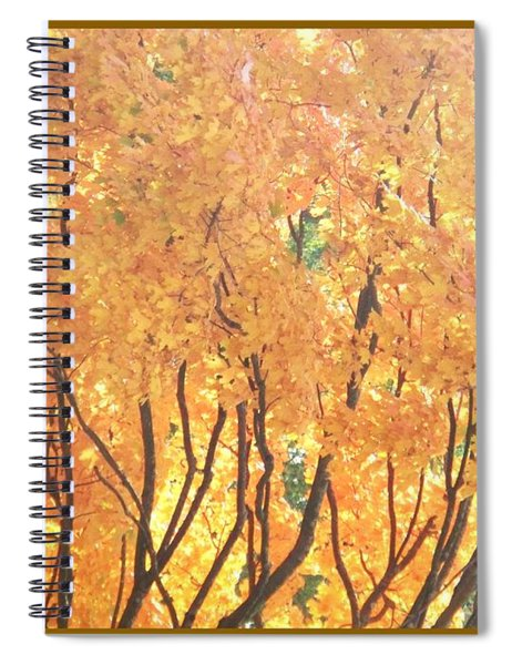 Fall Colors At Cape May Spiral Notebook