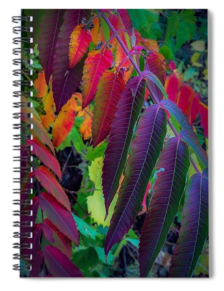 Fall Feathers Spiral Notebook