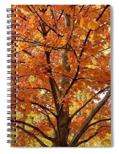 Fall In Kayloya Park 2 Spiral Notebook