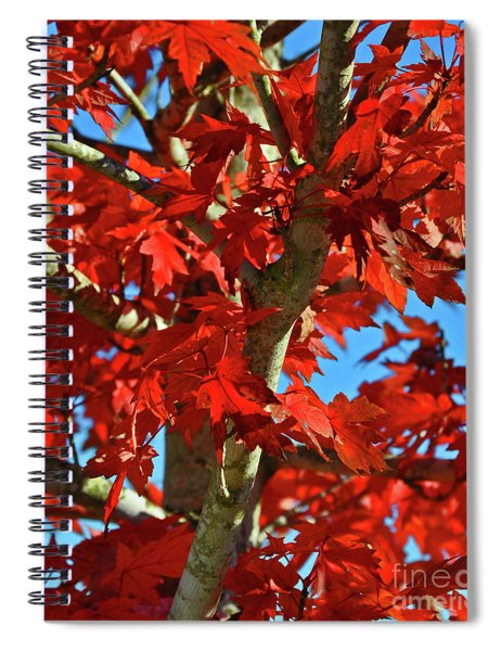 Fall Stars Spiral Notebook
