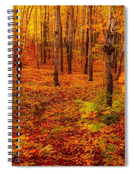 Fall Sugar Bush Spiral Notebook