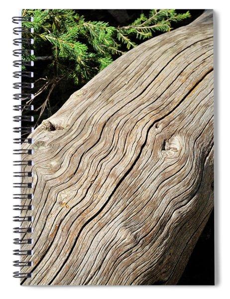 Fallen Fir Spiral Notebook