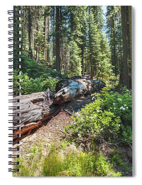 Fallen Tree- Spiral Notebook