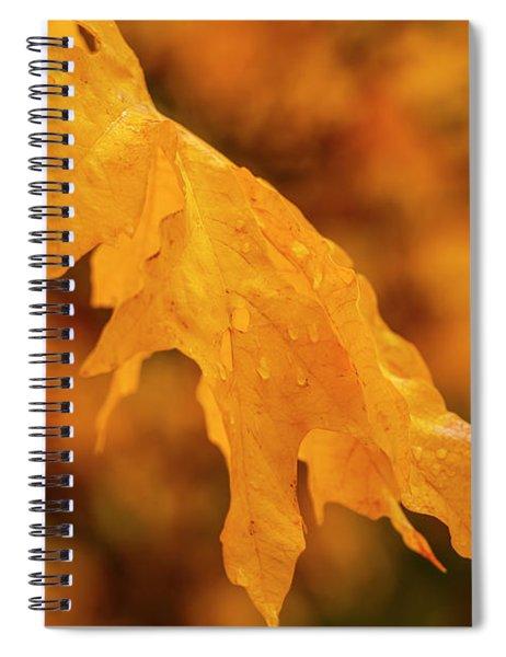 Falls At Central Cascade Spiral Notebook