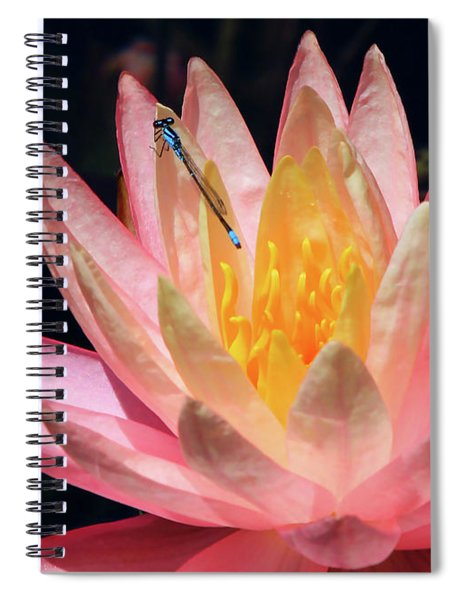 Familiar Bluet Damselfly And Lotus 2 Spiral Notebook
