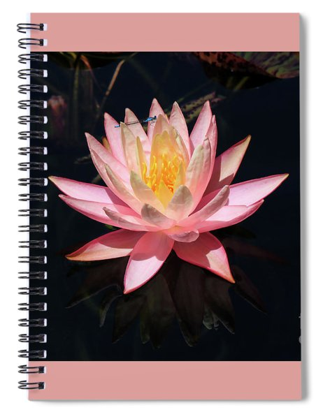 Familiar Bluet Damselfly And Lotus  Spiral Notebook