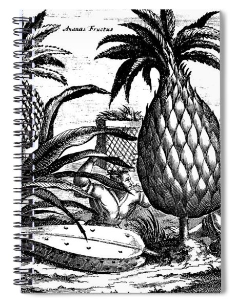 Farming Large Pineapples, Illustration From A Description Of Embassies To China, 1690  Spiral Notebook