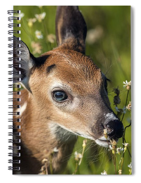 Fawn In Wildflowers Spiral Notebook