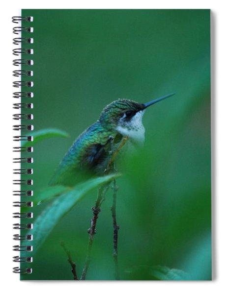 Feeling Green Spiral Notebook