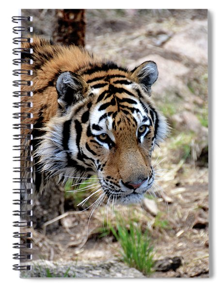 Feline Focus Spiral Notebook